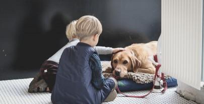 Una mascota en casa: ¿para qué?